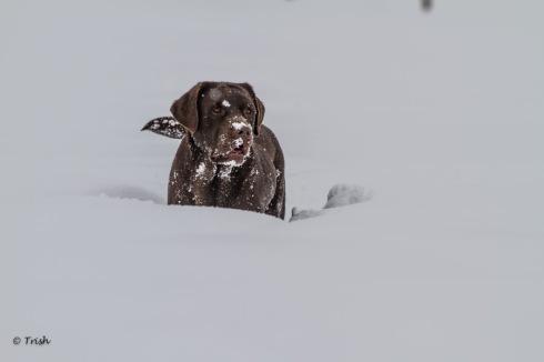 Whisper in snow-2996